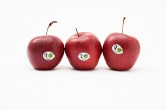jablkagrojeckie1
